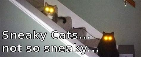 Sneaky Cat Meme - tangible online casino illusions july 2014