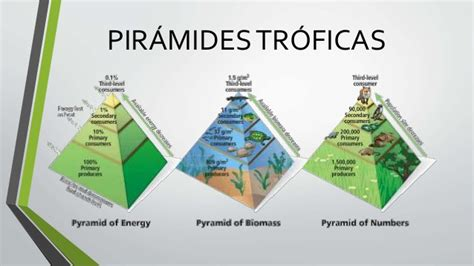 cadenas alimentarias piramides ecologicas pir 225 mides tr 243 ficas flujo de energ 237 a en los ecosistemas