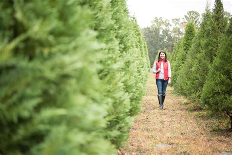 christmas tree farm in georgia lavin label