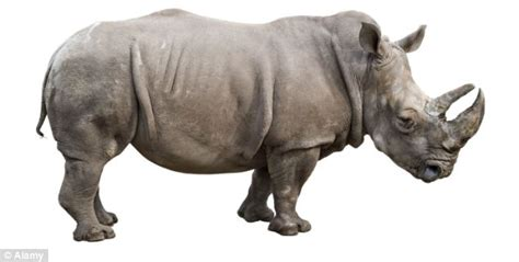 The Rhino DNA database that could cut down on poaching ...