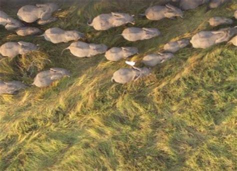 imagenes raras vistas desde google earth fotos curiosas en google earth imagenes raras rankeen com