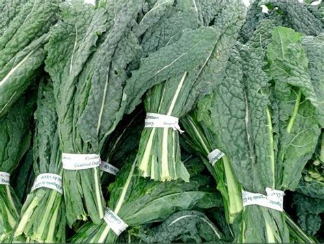 friday s food focus kale borecole just living foods