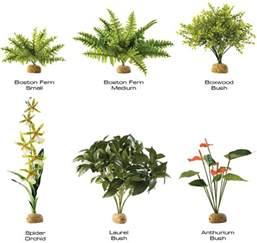 Plants In Tropical Rainforests - pictures plants found tropical rainforest just for sharing