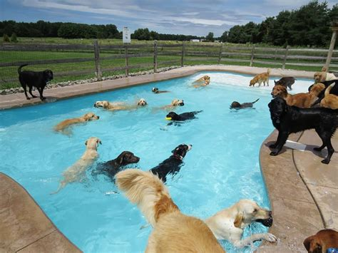 puppies in pool can we getz a bigger swimming pool meme