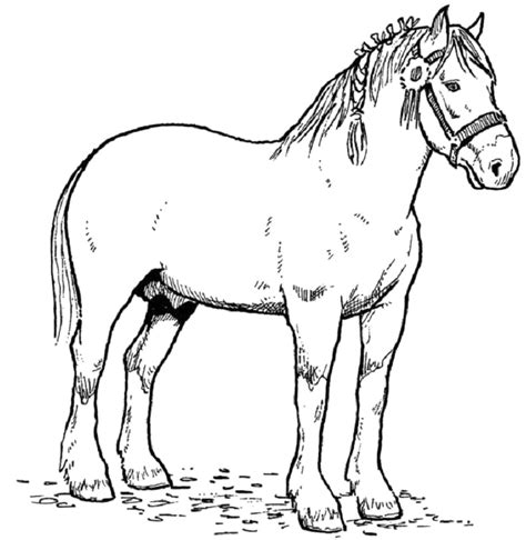 coloring pages of horses jumping coloring pages of horses 18 image available gianfreda net