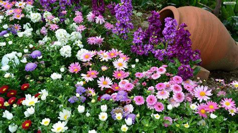 nice flower garden beautiful flower wallpapers for you spring wallpaper