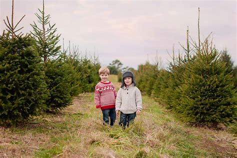 heinerman tree farm wv tree farm visit lori pickens photography best parkersburg wv portrait and wedding photographer