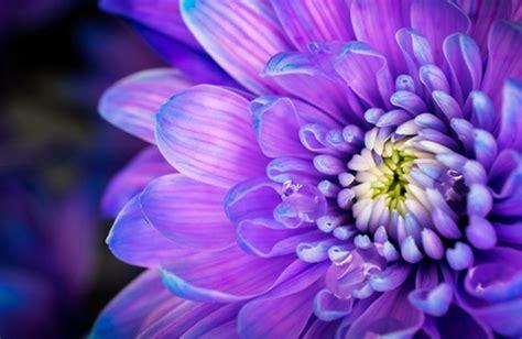 maggio fiori i fiori di maggio cure naturali it