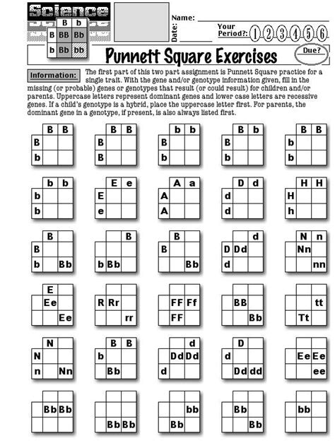 Punnett Square Worksheet by Worksheets About Punnett Squares Punnett Square