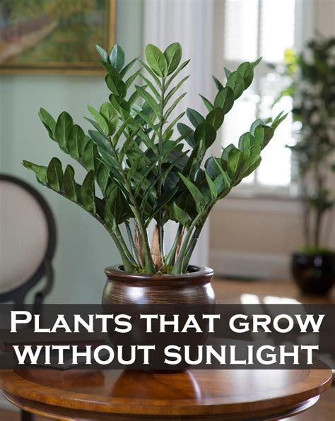Which Plants Can Survive Without Sunlight | plants that grow without sunlight green leaf tips