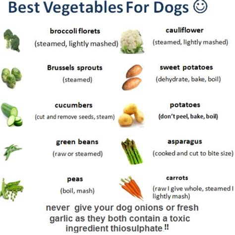 vegetables safe for dogs best vegetables for dogs s best friend