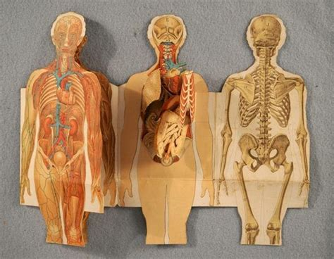 anatomy book with cadaver pictures human dissection illustrated in anatomical pop up books