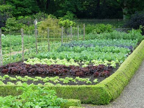 Pics Of Vegetable Gardens 10 Tips On Growing Your Own Vegetable Garden Preen