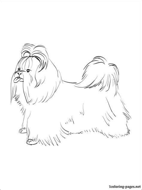 shih tzu coloring page coloring pages