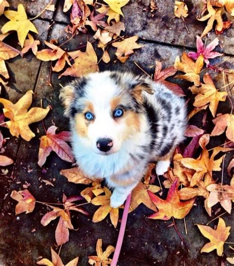fall puppies puppy pics pumpkin spice is so last season unbelievab ly