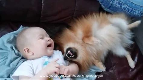 baby pomeranian for sale in singapore 5 months baby with pomeranian puppy doovi