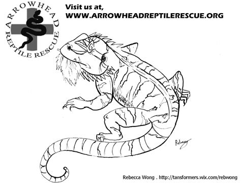 free coloring pages of bearded dragons