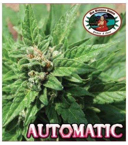 automatic bid automatic big buddha seeds zativo