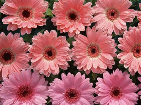 pink flower wallpaper wallpapers pink flowers wallpapers