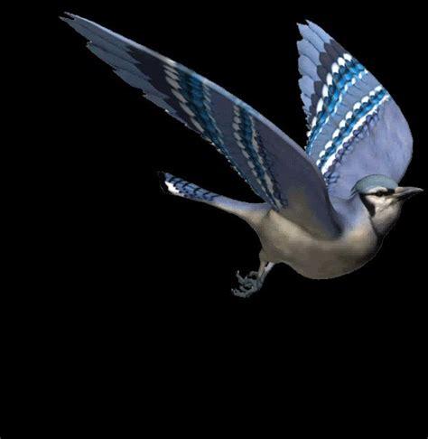 Moving Blue Deer Moving Blue animated gif birds beautiful flying bird photo