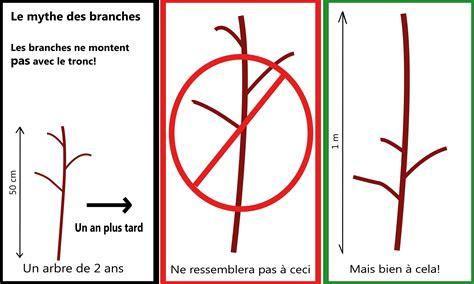 tailler un arbre fruitier au qu 233 bec pommier standard et