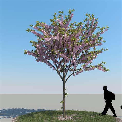 cherry tree 3ds max 3ds max realistic cherry tree