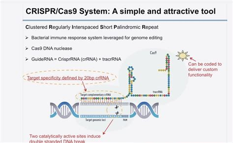 precision medicine crispr and genome engineering moving from association to biology and therapeutics advances in experimental medicine and biology books crispr cas9 gene editing with precision mpnforum magazine