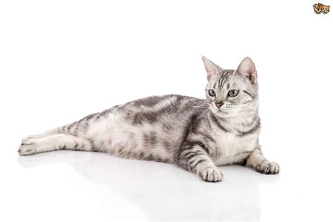 how to keep your cat safe and healthy pets4homes
