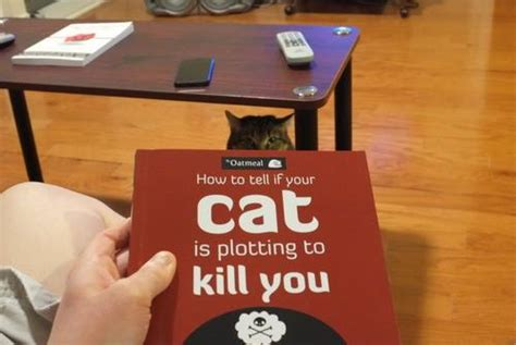 how to your to kill how to tell if your cat is plotting to kill you the oatmeal