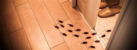 formiche volanti come eliminarle disegno 187 come eliminare gli scarafaggi in cucina
