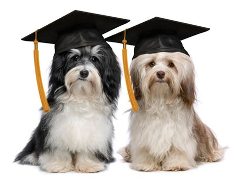 puppy graduation graduation cap search we it animals dogs and puppy