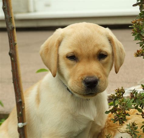 dogs name in up names 150 brilliant boy puppy name ideas