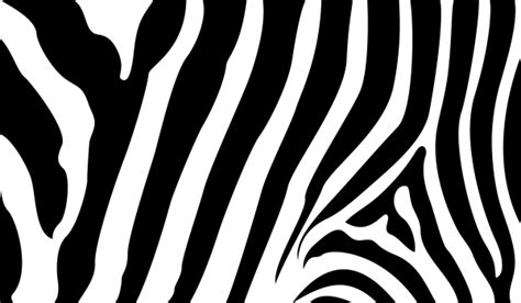 zebra stripe vector pattern zebra stripe free clipart