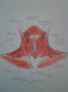 diagram of the neck the muscles of the neck aijalon cabiness glen