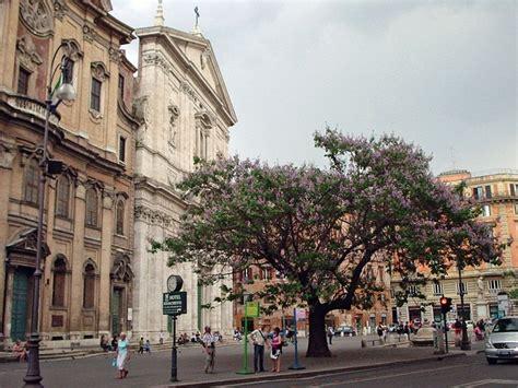 chinesischer blauglockenbaum kaufen 1000 ideen zu blauglockenbaum auf iphone 6