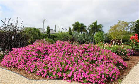 pink garden ideas costa farms