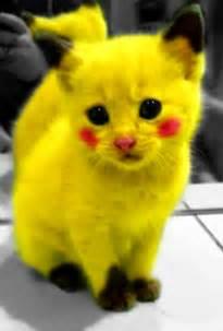 cat parade fashion meowtise music tibbles 2 believed blog winzen