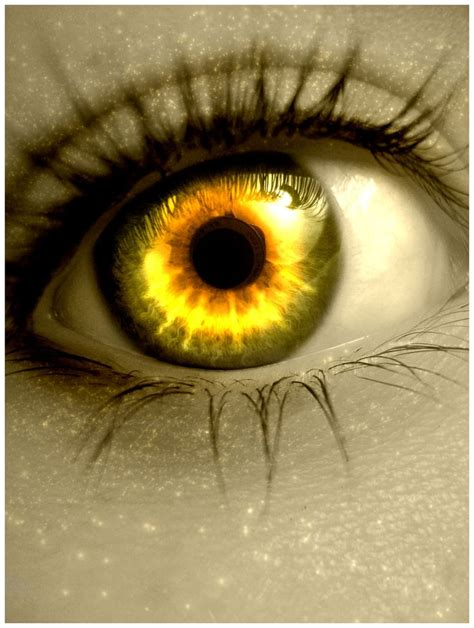 gold colored contacts 1000 images about cool contact lenses on eye