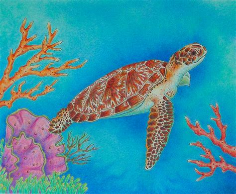 colors of turtles sea turtles drawings colorful