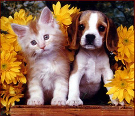 puppies and kittens together kitten and puppy together kitties kittens puppys and