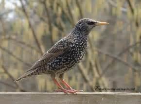 des oiseaux dans nos jardins arrosoirs et s 233 cateurs