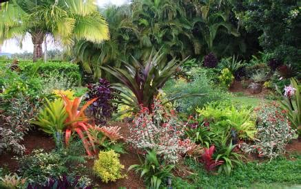 tropical landscaping ideas plants for the tropical landscape