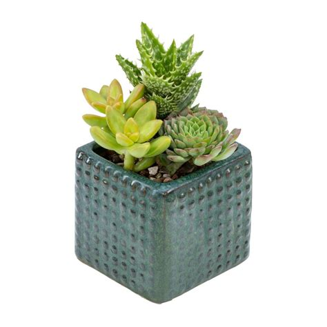 living 3 in square hobnail succulent garden 0850760 the