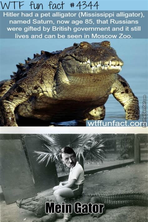 Gator Meme - nazi memes best collection of funny nazi pictures