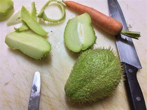 come si cucina la zucchina spinosa ricerca ricette con zucchina spinosa giallozafferano it