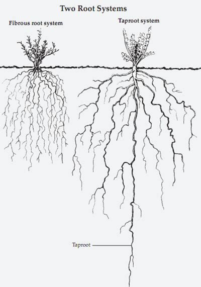 roots of style do you live in a minimalist traditional house plant life roots