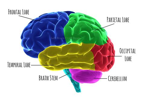 what color is the brain the last of the pseudo science after a brain injury