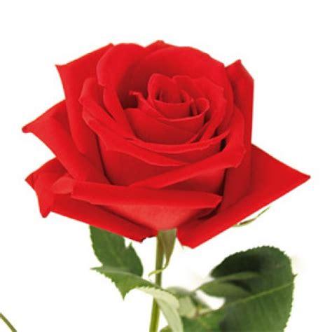 Bunga Mawar Real Touch Kuncup Merah single gift wrapped