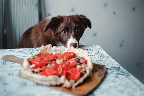can dogs tomatos can dogs eat tomatoes read this before you re in the