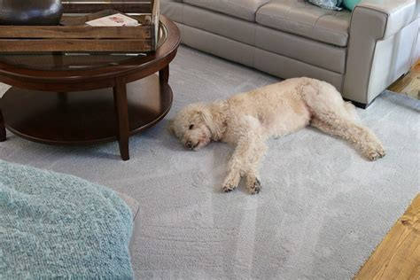 Pet Friendly Carpet Makes Life Easier   Refresh Restyle